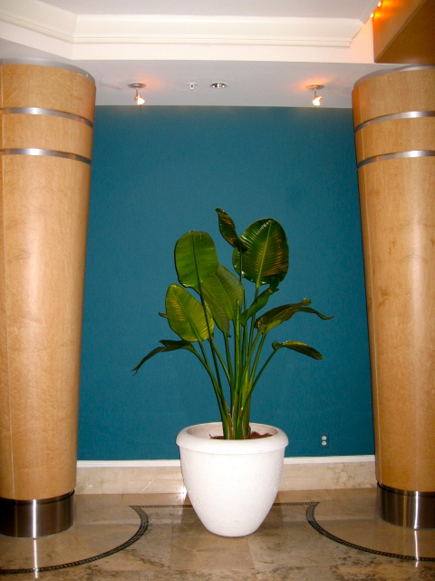 Four Seasons Botanicals Indoor Plant Service Dade And Broward. Call ...