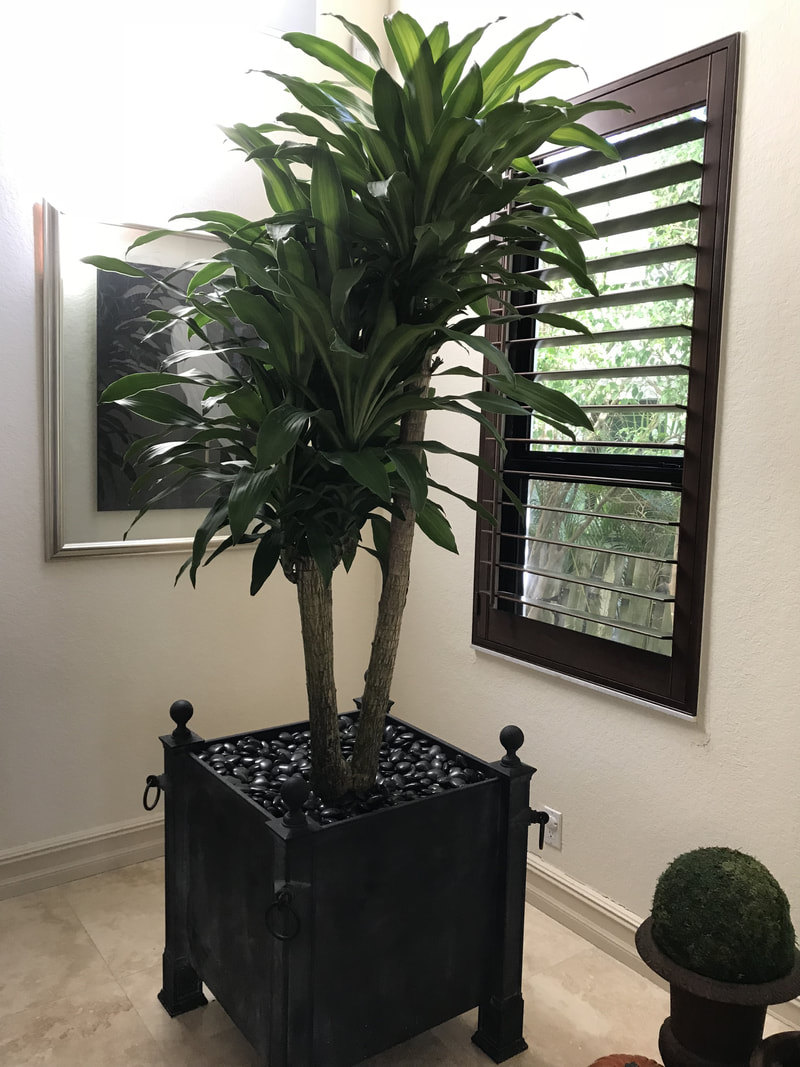 Four Seasons Botanicals Indoor Plant Service Dade And Broward. Call Now Or  Email For Free Consultation: 786 213 3932 Info@fourseasonsbotanicals.com